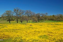 Free Springtime Meadow Royalty Free Stock Images - 676519