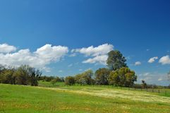 Springtime meadow Royalty Free Stock Photography
