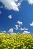 Springtime meadow stock image