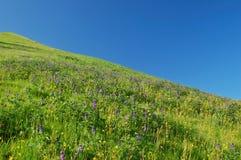 Springtime meadow Royalty Free Stock Image