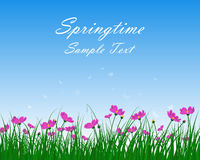 Springtime Meadow Royalty Free Stock Images