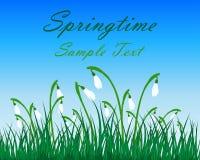 Springtime Meadow Stock Photo