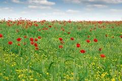 Springtime meadow wild flowers Stock Image