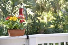 Springtime means flowers and hummingbirds coming back to the garden royalty free stock image