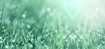 Springtime morning banner Royalty Free Stock Images