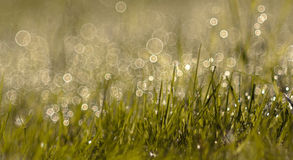 Springtime morning dew Stock Photography