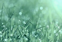Springtime morning dew Stock Images