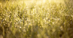 Springtime morning dew Royalty Free Stock Images