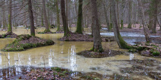 Springtime morning in wetland forest Stock Photography