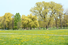 Springtime in Munich Royalty Free Stock Photo