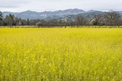 Napa Valley, wine country Royalty Free Stock Photography