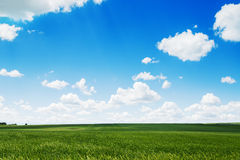 Springtime. Natural background of a green field and sky clouds. Stock Images