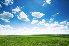 Springtime. Natural background of a green field and sky clouds. Stock Photography