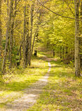 Springtime nature trail Stock Images