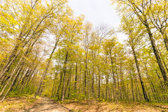 Springtime nature trail Stock Photography