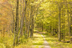 Springtime nature trail Royalty Free Stock Photography
