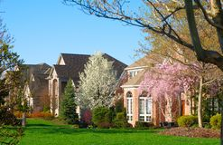 Springtime neighborhood. An upscale neighborhood in spring with flowering cherry trees Royalty Free Stock Image