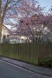 Springtime neighborhood stock image