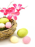 Springtime nest Royalty Free Stock Images