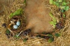 Springtime nest border Stock Images