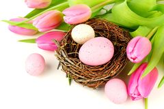 Springtime nest and flowers Stock Image