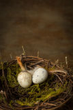 Springtime nest Royalty Free Stock Photography