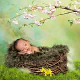 Springtime newborn baby. Cute little african baby in a nest in front of easter or springtime background Royalty Free Stock Image