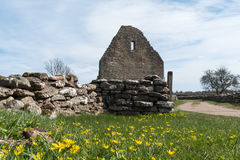 Springtime by an old ruin. Springtime by the old ruin of Saint Knuts Chapel at the swedish island Oland Stock Images