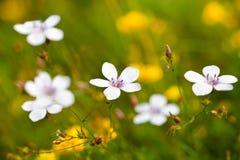 Springtime On The Field Stock Image