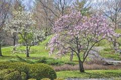 Springtime Park Stock Photos