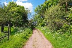 Springtime park with a path Stock Image