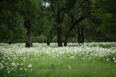 Springtime pasture in Central Texas stock photography