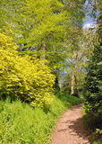 Springtime pathway through the trees. A view of some springtime trees and shrubbery in the English countryside Royalty Free Stock Photography
