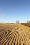 Springtime patterned landscape. Agricultural landscape in springtime with blue sky over hedgerows and drill patterns in arable field Royalty Free Stock Photography