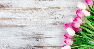 Springtime pink tulips on white weathered wooden boards Stock Image