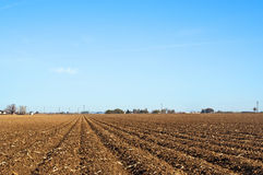 Springtime planted and waiting. Cornfield in the spring. Planted and waiting for the first shoots of green to show Royalty Free Stock Photo