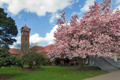 Springtime at Portland Train Station Royalty Free Stock Photography