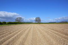 Springtime potato field. An english agricultural springtime landscape with cultivated chalky soil patterns and textures of an arable field prepared for planting Royalty Free Stock Photo