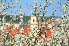 Springtime in Prague Stock Photos
