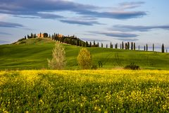 Springtime in the provence of Siena, Tuscany royalty free stock photo