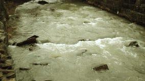 Springtime river flood stock video