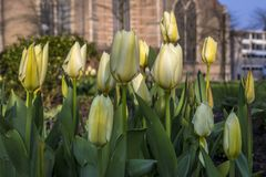 Springtime in Rotterdam Holland royalty free stock photography