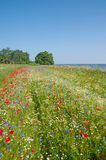 Springtime on Ruegen Island,baltic Sea,Germany Royalty Free Stock Photos