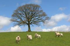 Springtime Scene Royalty Free Stock Image