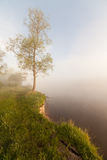 The Springtime Shoreline of a Foggy Mountain Lake at Sunrise Royalty Free Stock Photo