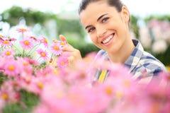 Springtime, smiling woman in garden of daisies flowers Stock Photos
