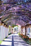 Springtime in sorrento. Garden in  springtime  with columns and wisteria in sorrento Stock Images
