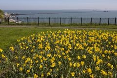 Springtime in Southend-on-Sea. A view of the Daffodils on Clifftown Parade, overlooking the Pleasure Pier in Southend-on-Sea in Essex, UK Stock Photo