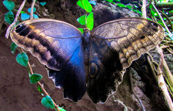 Springtime. The Spring  Butterfly of the Garden Royalty Free Stock Photo