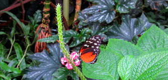 Springtime. The Spring  Flower of the Garden Stock Photo